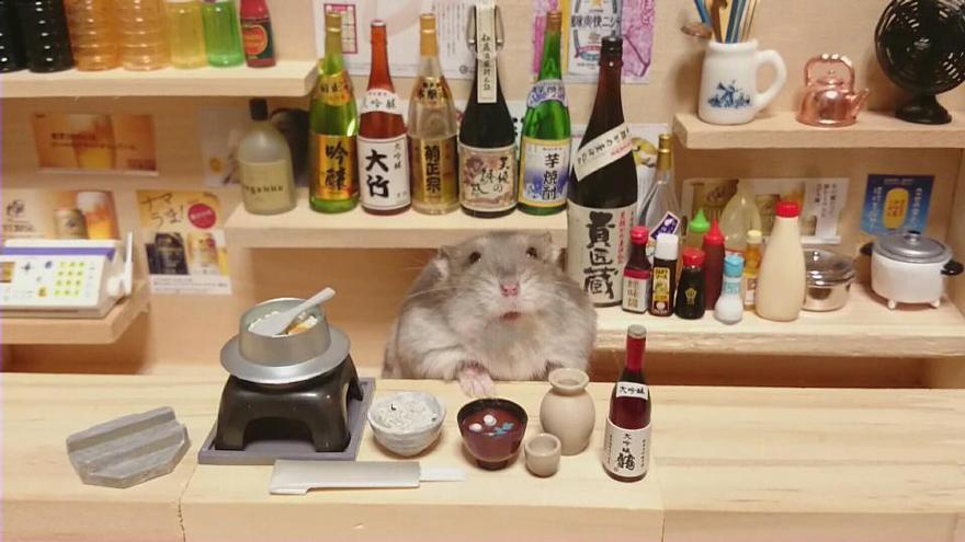 hamsters 19
