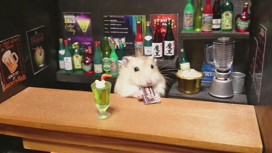 hamsters 5