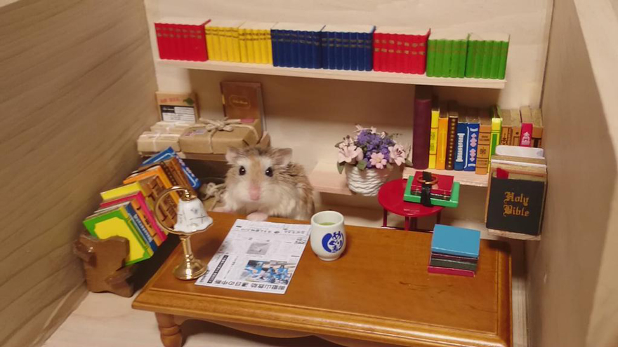 hamsters 9
