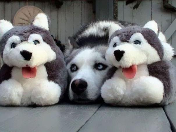 mascotas camufladas 11