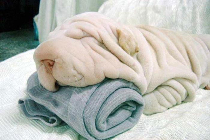 mascotas camufladas 15