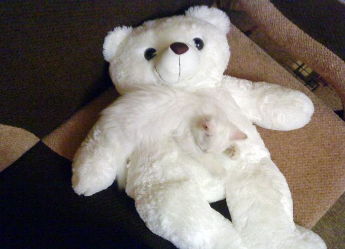 mascotas camufladas 6
