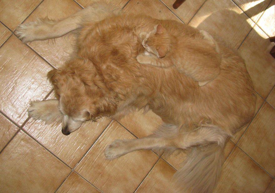 mascotas camufladas 7