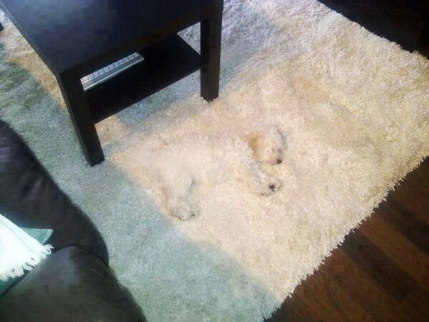 mascotas camufladas 8