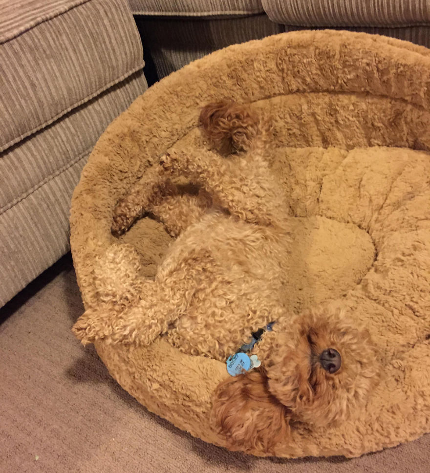 mascotas camufladas