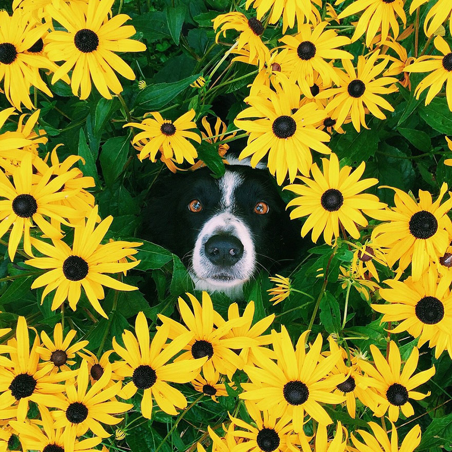 momo perro escondite