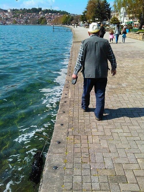 otra forma de pasear a tu perro