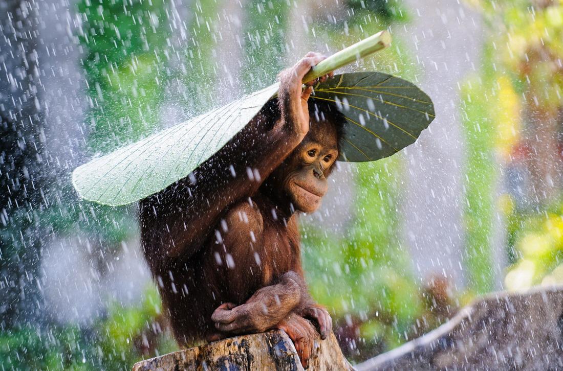a nadie le gusta mojarse
