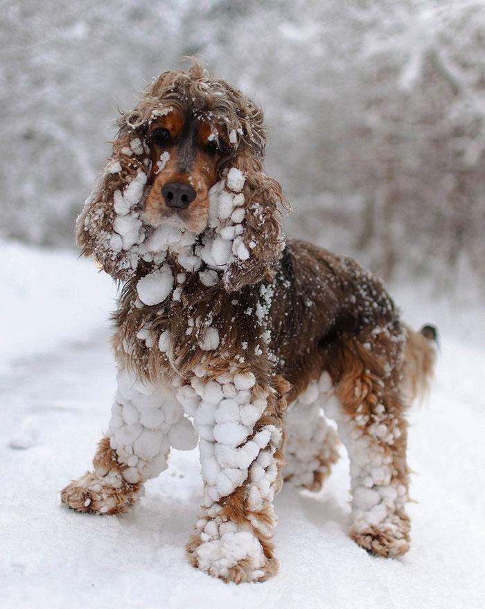 animales nieve 10