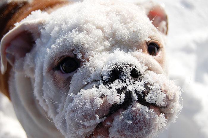 animales nieve 12