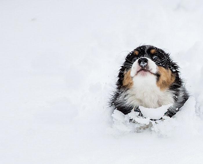 animales nieve 14