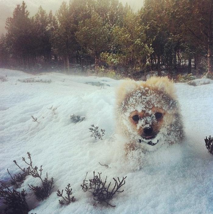 animales nieve 18