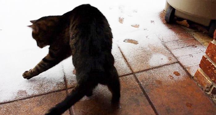 animales nieve 20