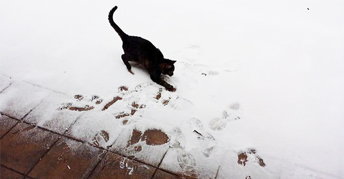 animales nieve 21