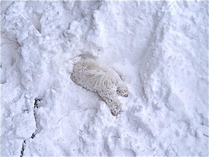 animales nieve 23