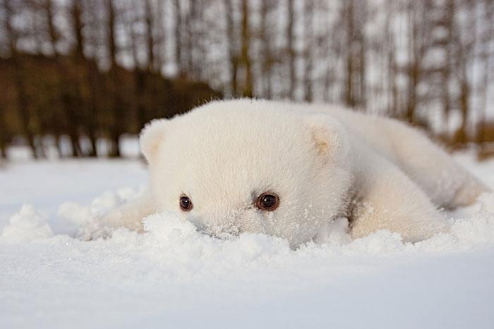 animales nieve 3