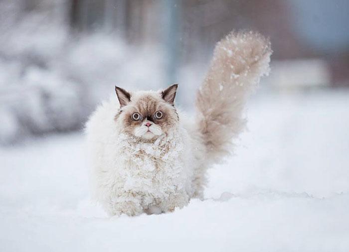 animales nieve 4