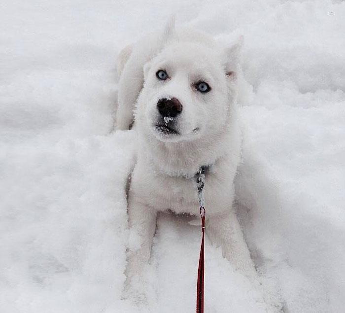 animales nieve 8