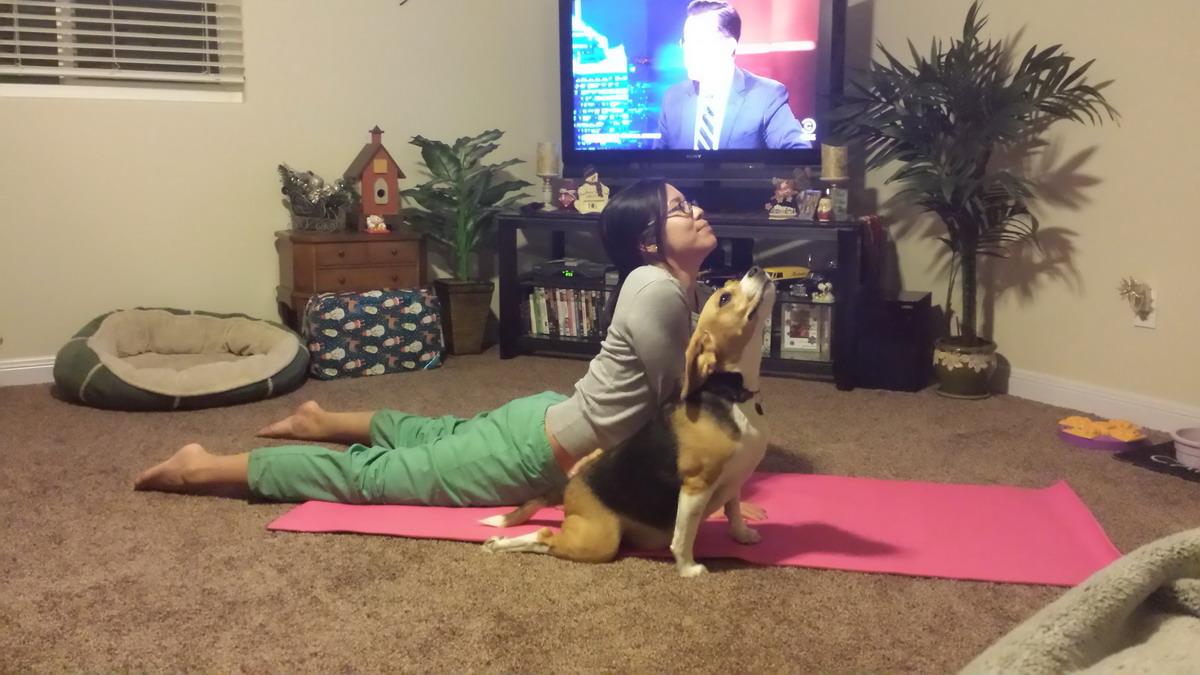 clases de yoga perrunas