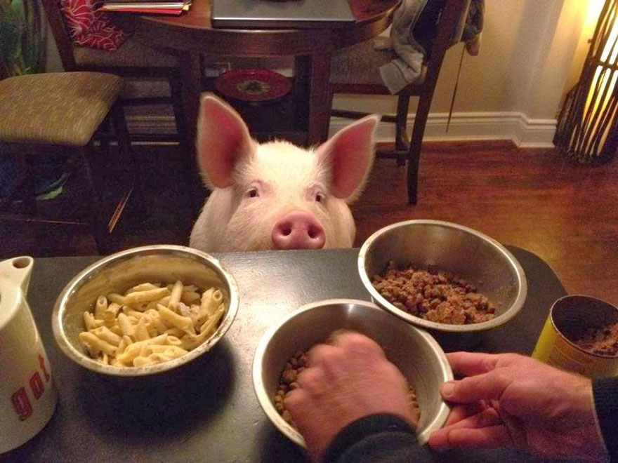 de cerdito a cerdo 6