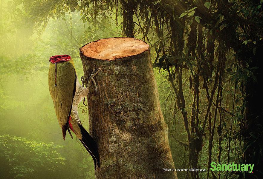 deforestacion 2