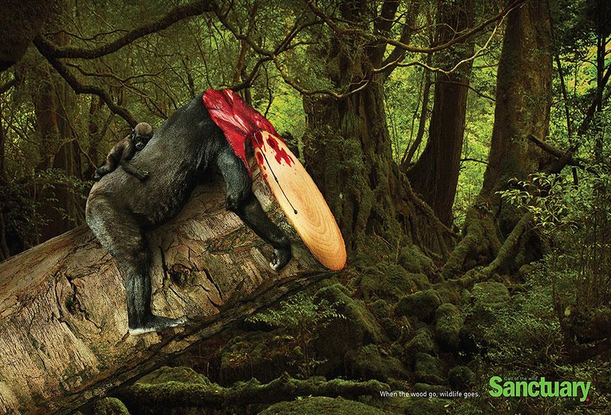 deforestacion 3