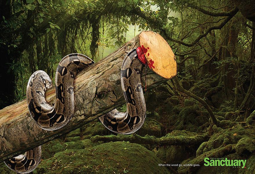 deforestacion 4