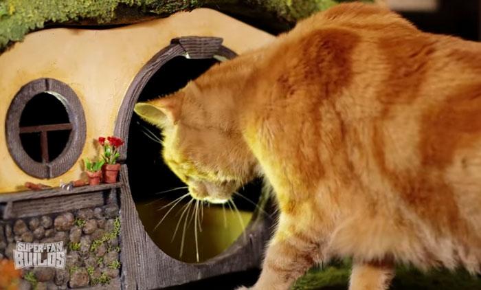 gato como en el senor de los anillos 6