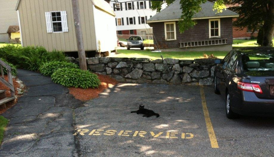 gato con plaza de parking