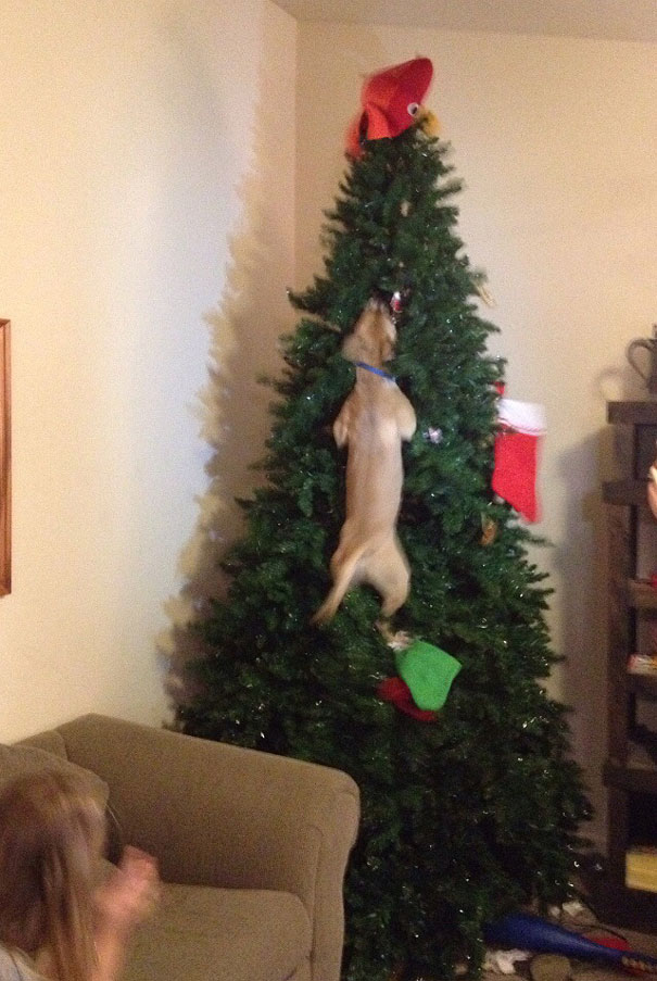 mascotas Navidad 10