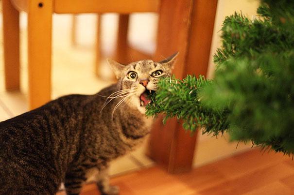 mascotas Navidad 11