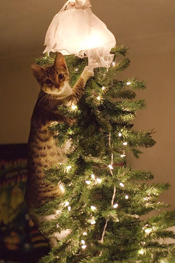 mascotas Navidad 12