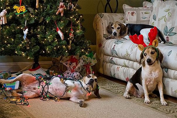 mascotas Navidad 13