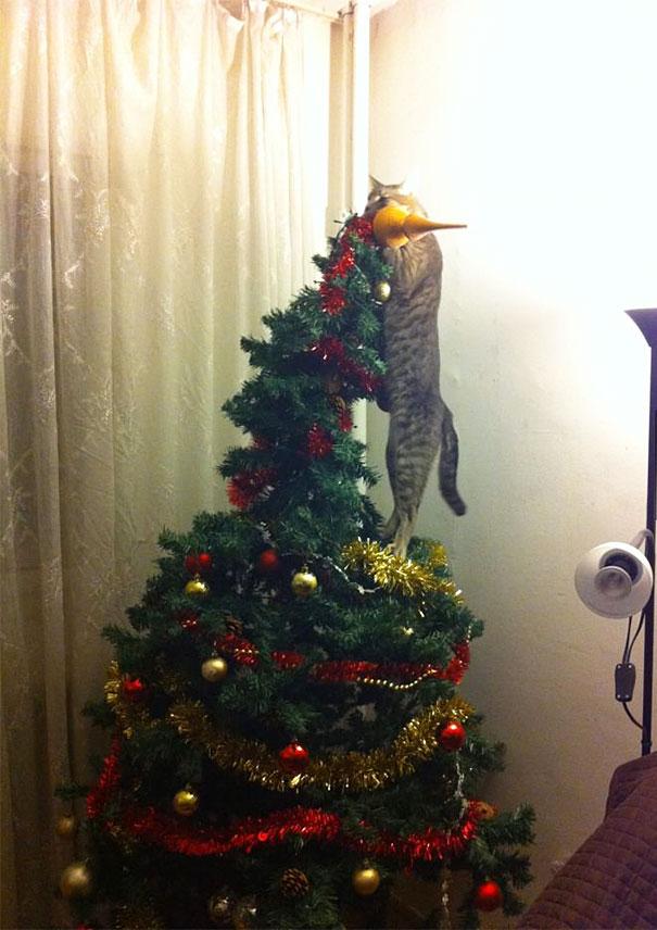 mascotas Navidad 14