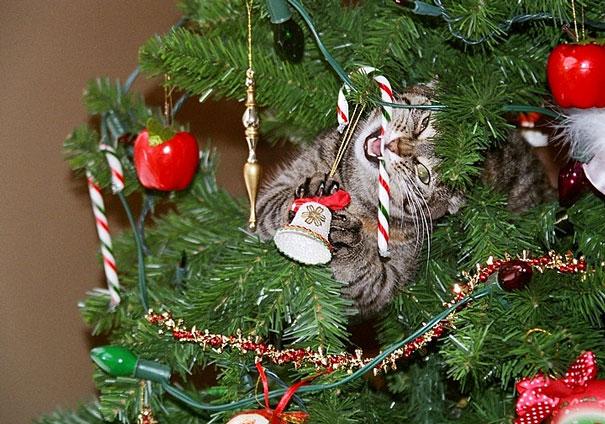 mascotas Navidad 3