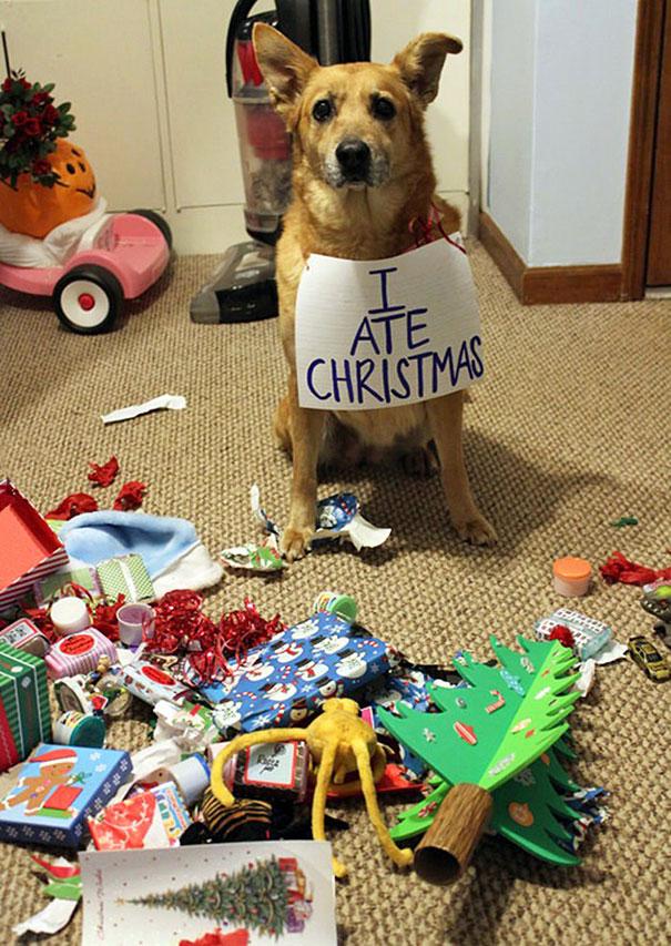 mascotas Navidad 4