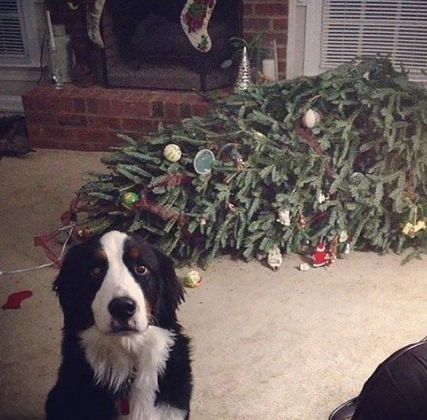 mascotas Navidad 5