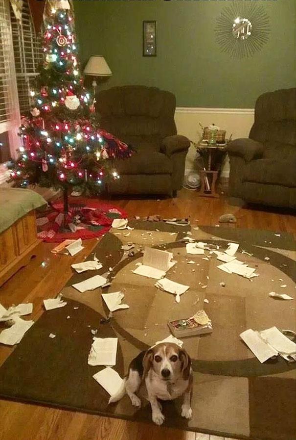 mascotas Navidad 6