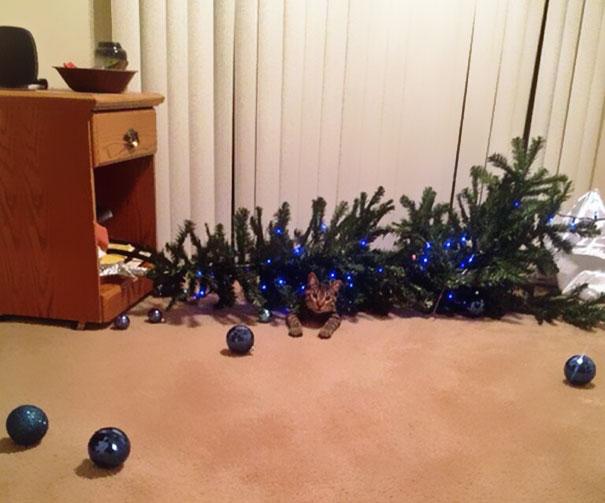 mascotas Navidad