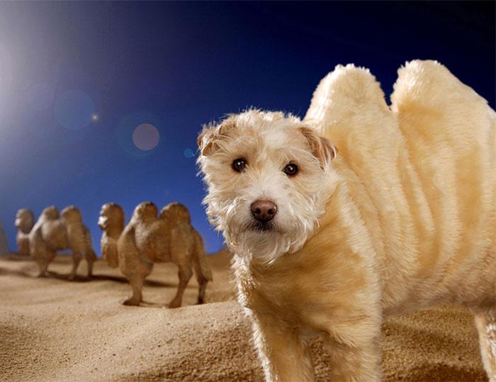 perro animales 2006