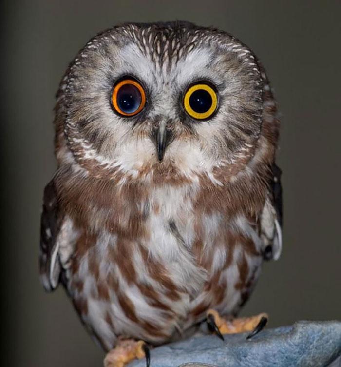 animales ojos distinto color 13