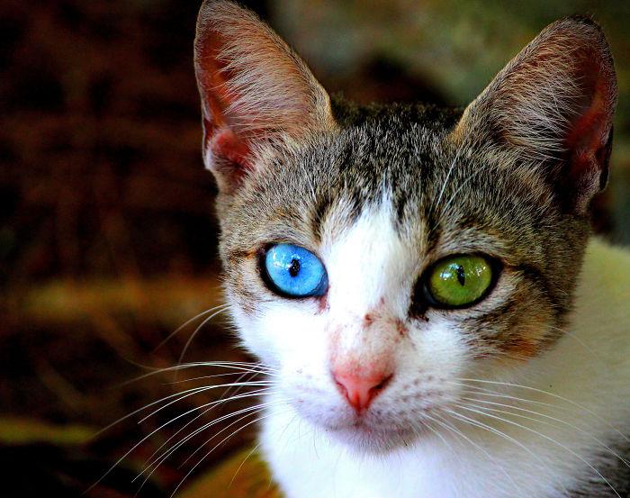 animales ojos distinto color 15