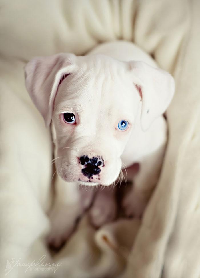animales ojos distinto color 17