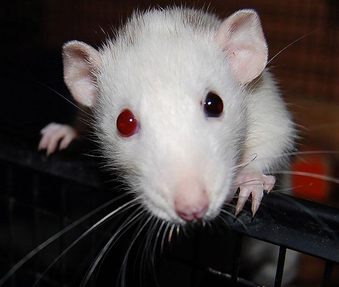 animales ojos distinto color 18