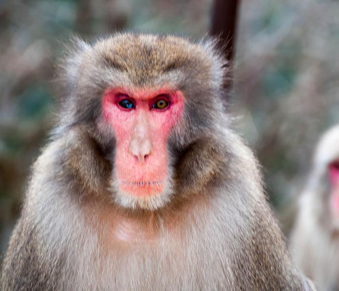 animales ojos distinto color 19