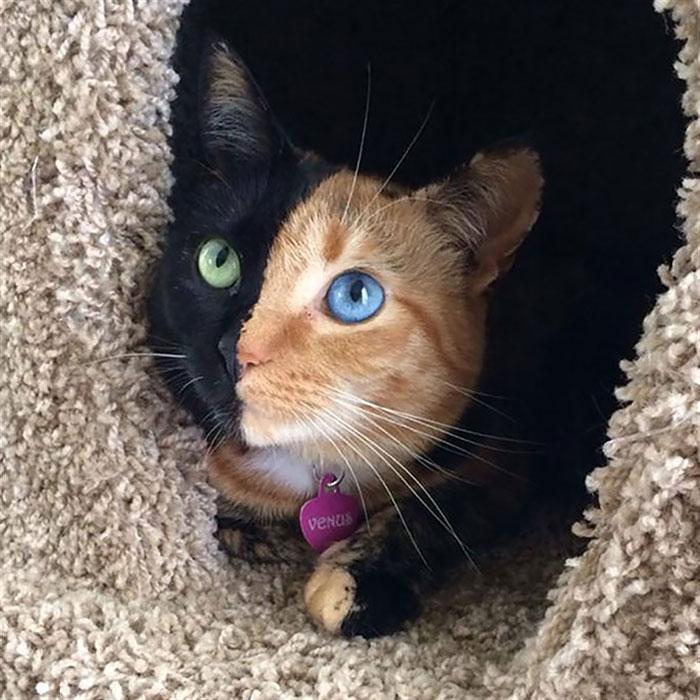 animales ojos distinto color 2