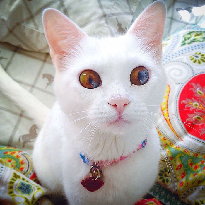 animales ojos distinto color 4