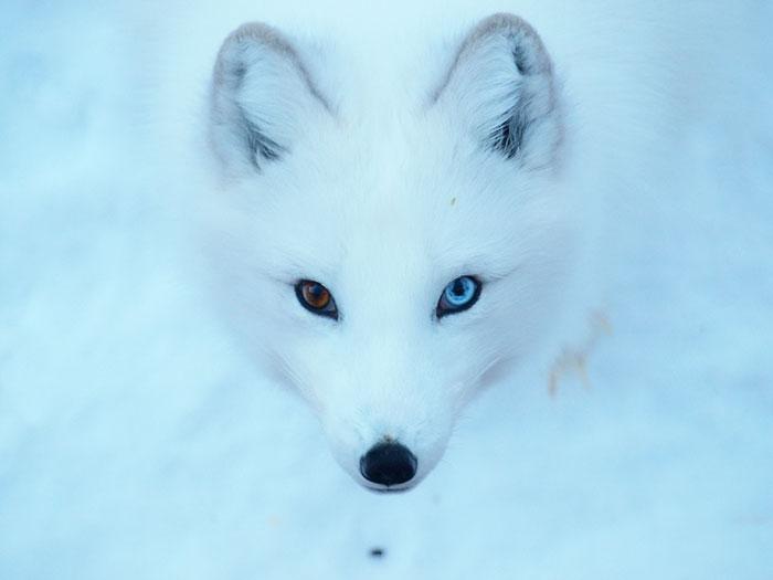 animales ojos distinto color 6