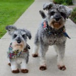 Clones de mascotas en formato peluche
