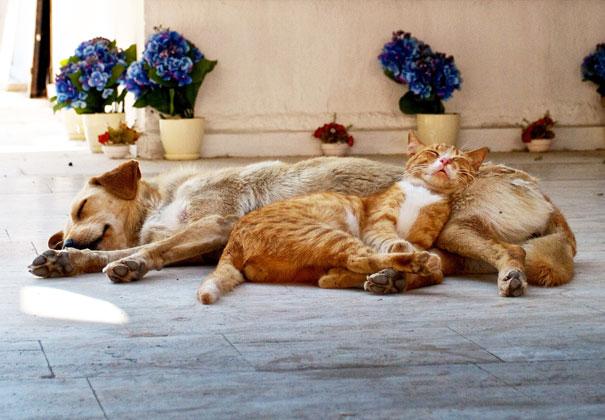 gatos y perros 12